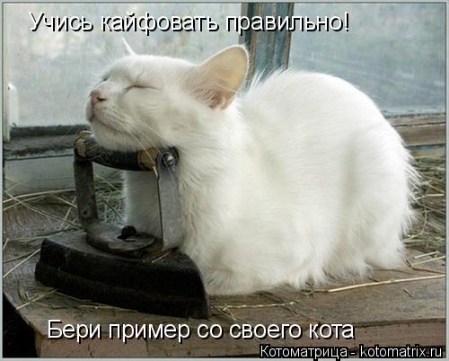 Котоматрица: Учись кайфовать правильно! Бери пример со своего кота