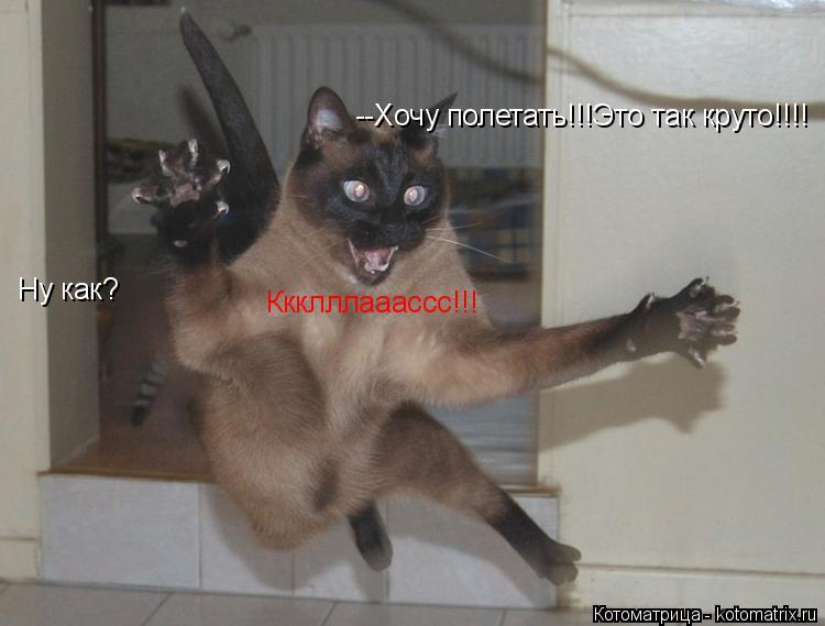 Котоматрица: --Хочу полетать!!!Это так круто!!!! Ну как? Ккклллааассс!!!