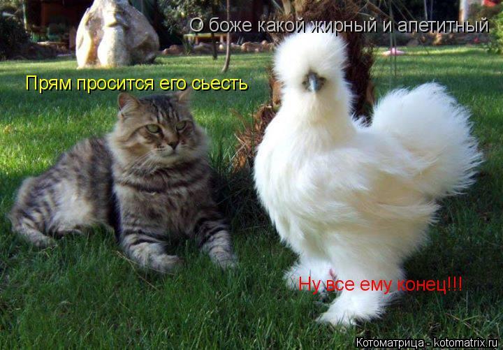 Котоматрица: О боже какой жирный и апетитный Прям просится его сьесть Ну все ему конец!!!