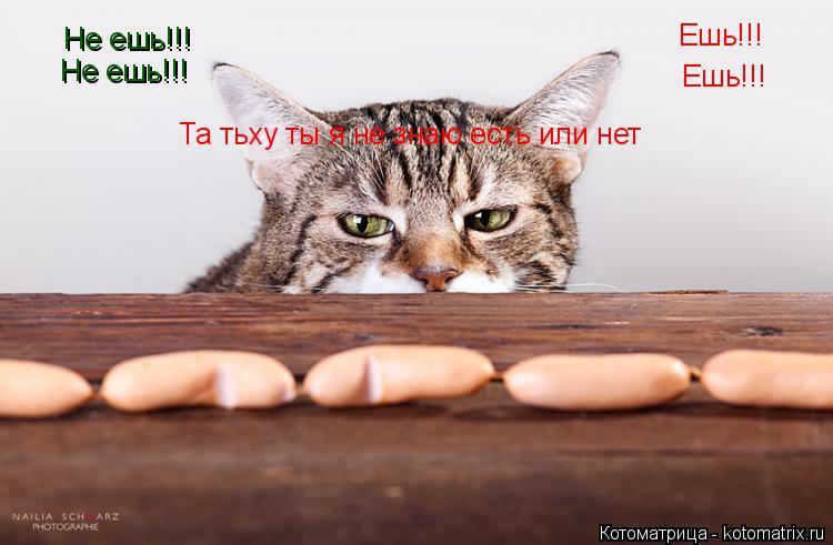 Котоматрица: Ешь!!! Ешь!!! Не ешь!!! Не ешь!!! Та тьху ты я не знаю есть или нет