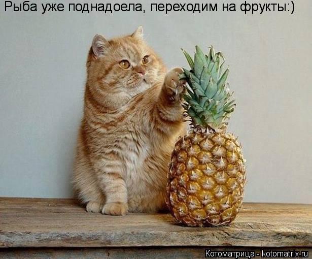 Котоматрица: Рыба уже поднадоела, переходим на фрукты:) Рыба уже поднадоела, переходим на фрукты:)