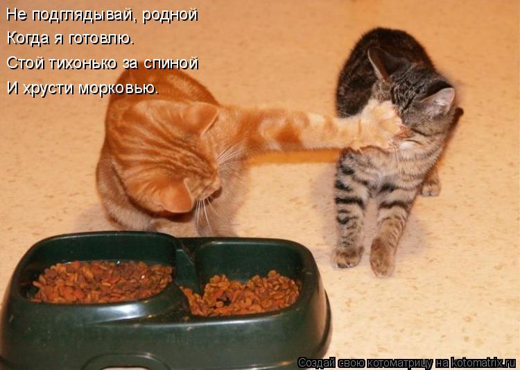 Котоматрица: Не подглядывай, родной Когда я готовлю. Стой тихонько за спиной И хрусти морковью.