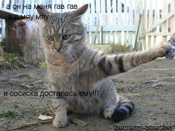 Котоматрица: а я мяу мяу  а он на меня гав гав  и сосиска досталась ему!!!