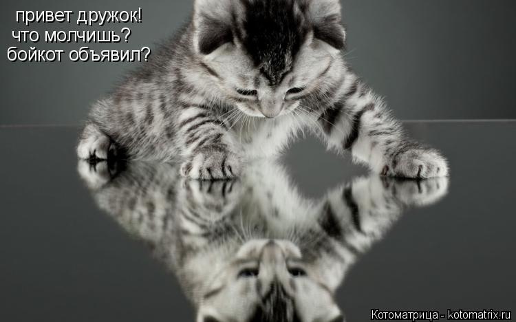 Котоматрица: привет дружок! что молчишь? бойкот объявил?