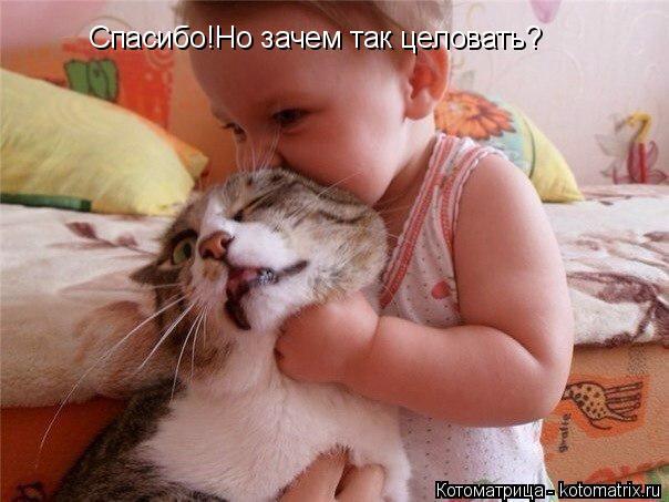 Котоматрица: Спасибо!Но зачем так целовать? Спасибо!Но зачем так целовать?