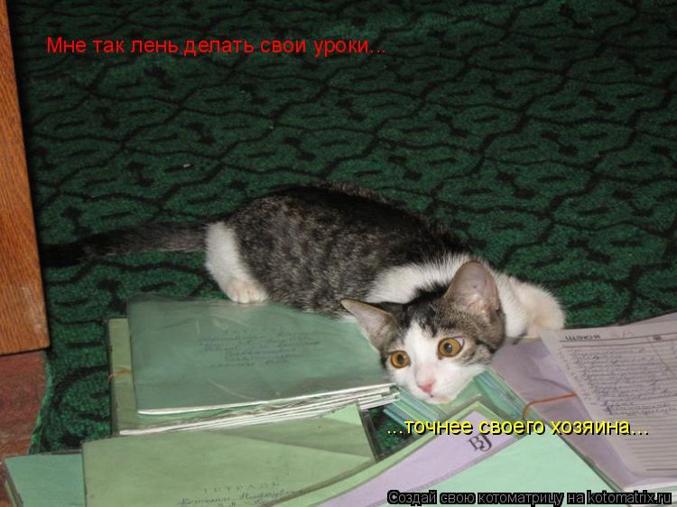 Котоматрица: Мне так лень делать свои уроки... ...точнее своего хозяина...