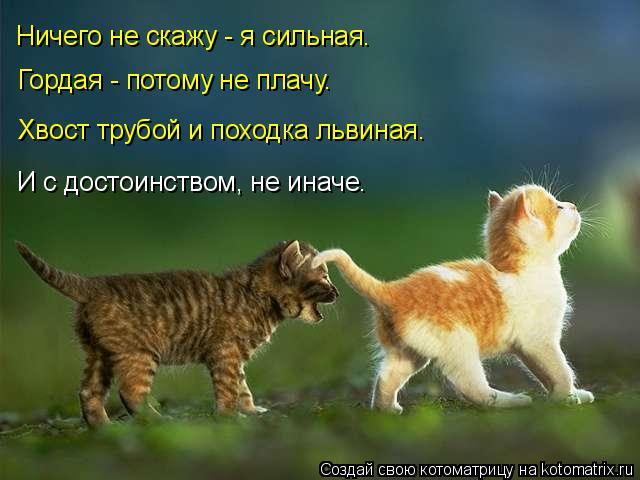 Котоматрица: Ничего не скажу - я сильная. Гордая - потому не плачу. Хвост трубой и походка львиная. И с достоинством, не иначе.
