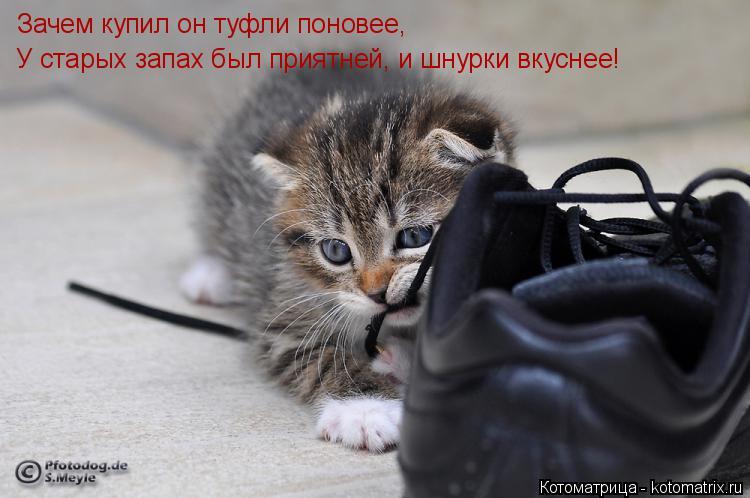 Котоматрица: Зачем купил он туфли поновее, У старых запах был приятней, и шнурки вкуснее!