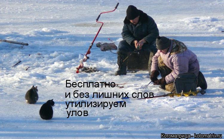 Котоматрица: Бесплатно и без лишних слов утилизируем  улов