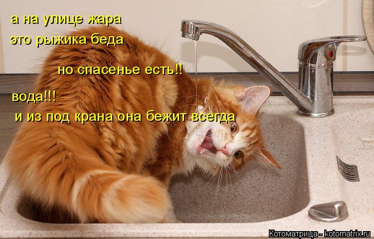 Котоматрица: а на улице жара  это рыжика беда но спасенье есть!!  вода!!!  и из под крана она бежит всегда