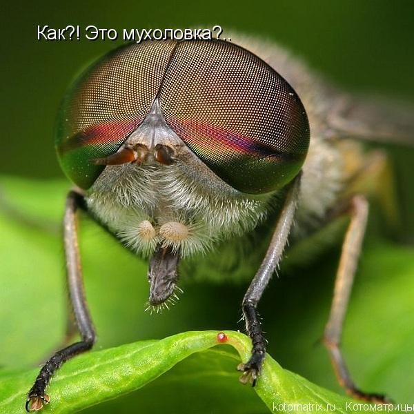 Котоматрица: Как?! Это мухоловка?..