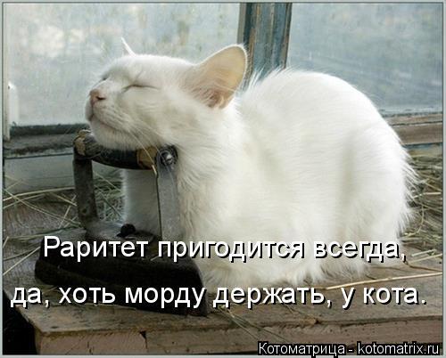 Котоматрица: Раритет пригодится всегда, да, хоть морду держать, у кота.