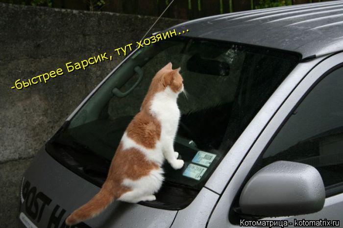 Котоматрица: -быстрее Барсик, тут хозяин... -быстрее Барсик, тут хозяин...