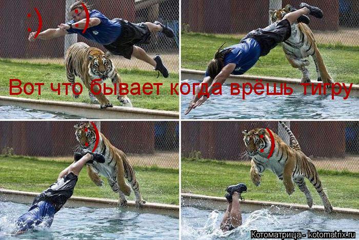 Котоматрица: Вот что бывает когда врёшь тигру  :) :) :) :)