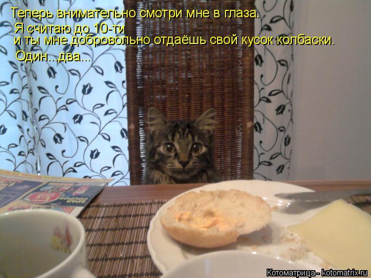 Котоматрица: Теперь внимательно смотри мне в глаза.    Я считаю до 10-ти  и ты мне добровольно отдаёшь свой кусок колбаски.  Один...два...