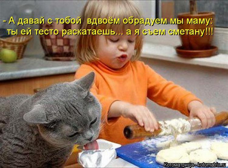 Котоматрица: - А давай с тобой  вдвоём обрадуем мы маму: ты ей тесто раскатаешь... а я съем сметану!!!