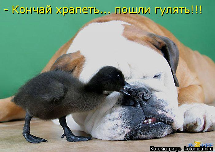 Котоматрица: - Кончай храпеть... пошли гулять!!!