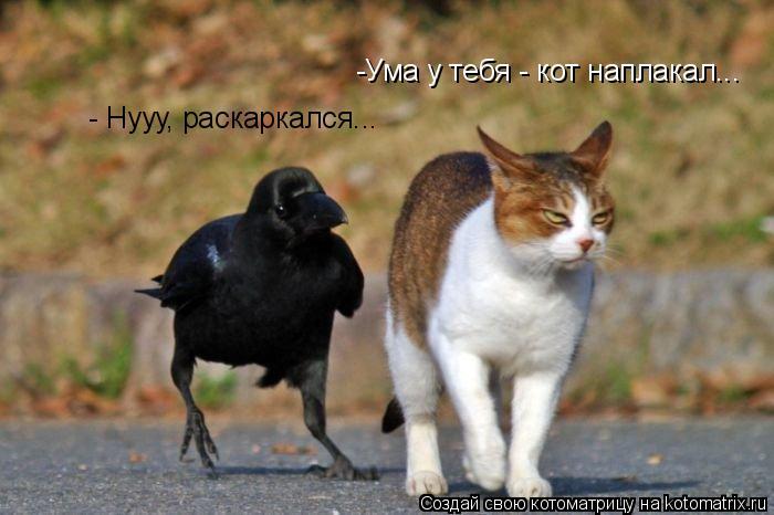 Котоматрица: -Ума у тебя - кот наплакал... - Нууу, раскаркался...