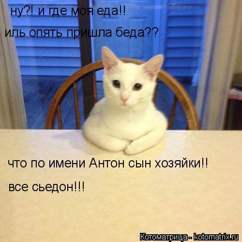 Котоматрица: ну?! и где моя еда!! иль опять пришла беда?? что по имени Антон сын хозяйки!!  все сьедон!!!