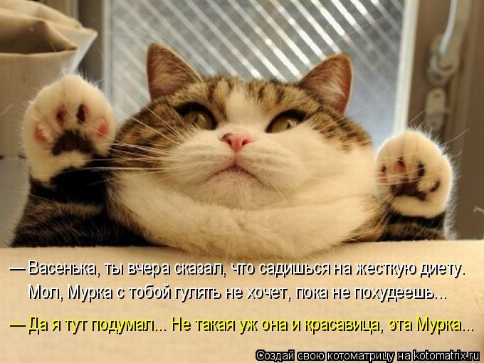 Котоматрица: — Васенька, ты вчера сказал, что садишься на жесткую диету.  Мол, Мурка с тобой гулять не хочет, пока не похудеешь... — Да я тут подумал... Не та