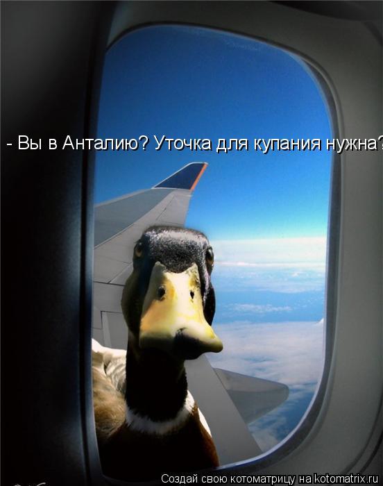 Котоматрица: - Вы в Анталию? Уточка для купания нужна?