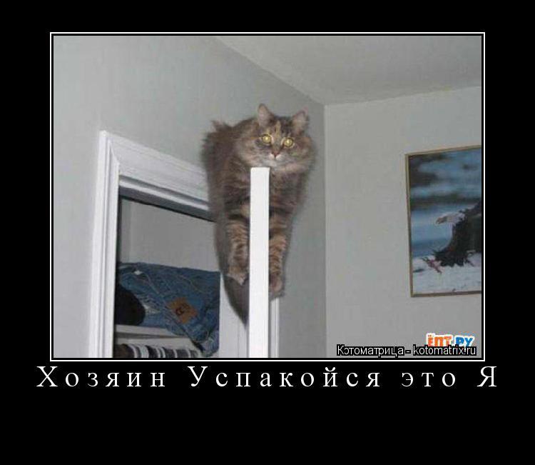 Котоматрица: Хозяин Успакойся это Я