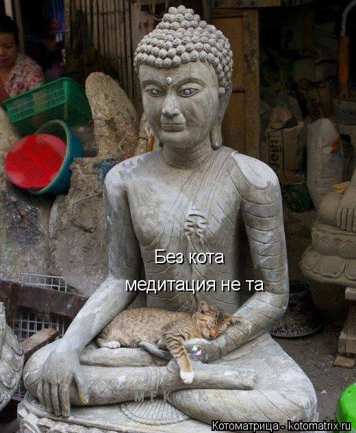 Котоматрица: Без кота медитация не та