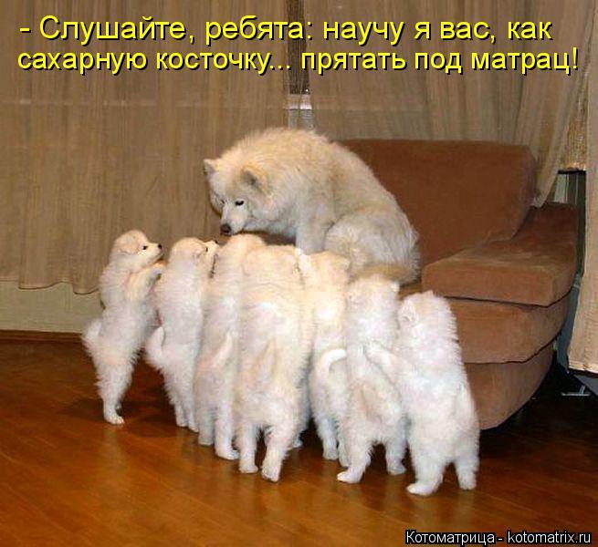 Котоматрица: - Слушайте, ребята: научу я вас, как сахарную косточку... прятать под матрац!