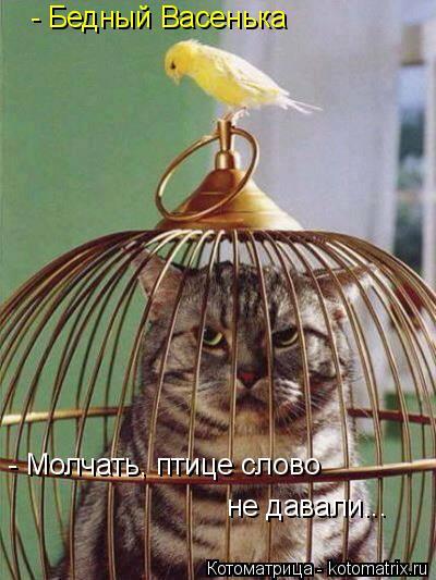 Котоматрица: - Бедный Васенька - Молчать, птице слово  не давали...