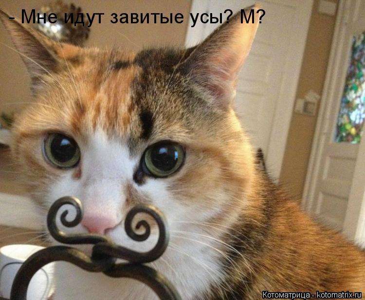 Котоматрица: - Мне идут завитые усы? М?