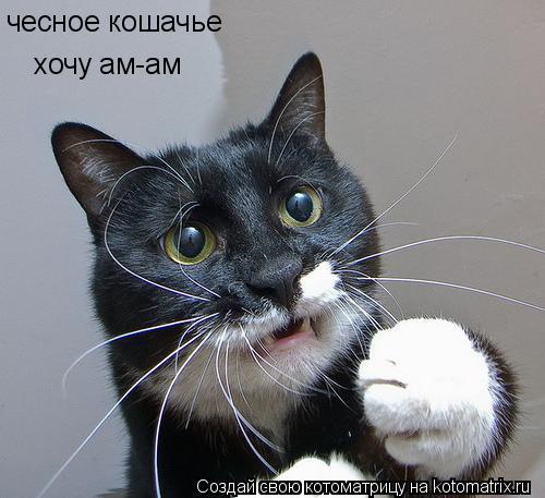 Котоматрица: чесное кошачье хочу ам-ам