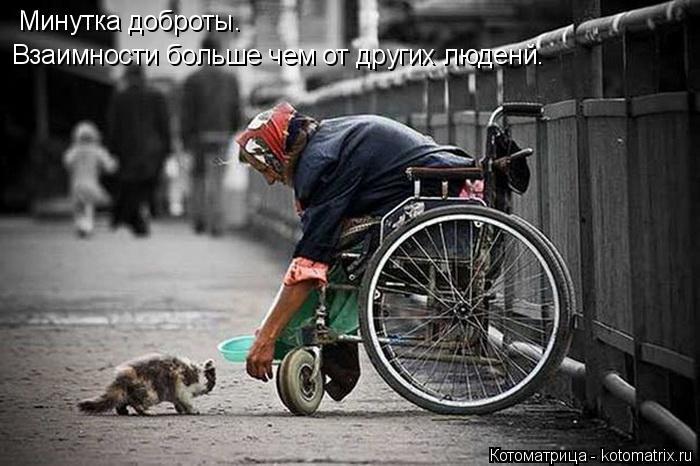 Котоматрица: Минутка доброты. Взаимности больше чем от других люденй.