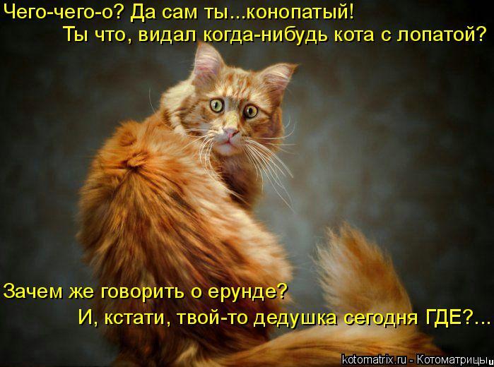Котоматрица: Чего-чего-о? Да сам ты...конопатый! Ты что, видал когда-нибудь кота с лопатой? Зачем же говорить о ерунде? И, кстати, твой-то дедушка сегодня ГДЕ