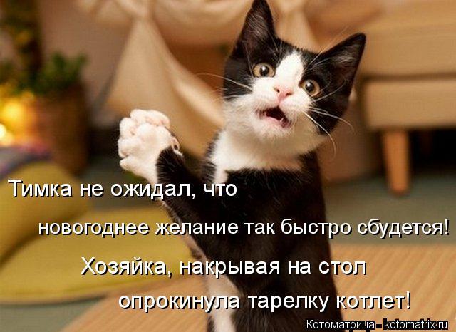 Котоматрица: Тимка не ожидал, что  новогоднее желание так быстро сбудется! Хозяйка, накрывая на стол  опрокинула тарелку котлет!