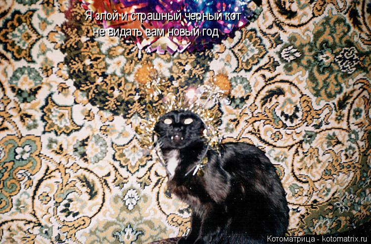 Котоматрица: Я злой и страшный черный кот не видать вам новый год