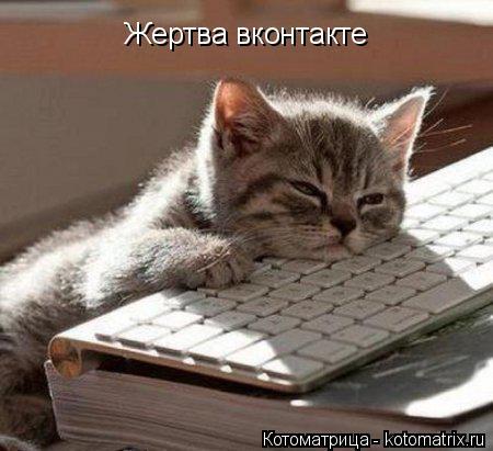 Котоматрица: Жертва вконтакте