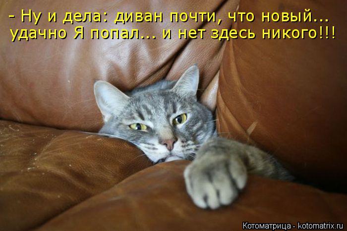 Котоматрица: - Ну и дела: диван почти, что новый... удачно Я попал... и нет здесь никого!!!