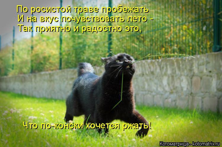 Котоматрица: По росистой траве пробежать И на вкус почувствовать лето - Так приятно и радостно это, Что по-конски хочется ржать!
