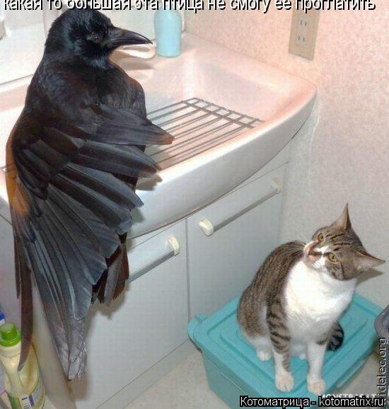 Котоматрица: какая то большая эта птица не смогу её проглатить