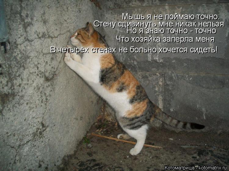 Котоматрица: Мышь я не поймаю точно. Стену сдивинуть мне никак нельзя Но я знаю точно - точно Что хозяйка заперла меня В четырёх стенах не больно хочется