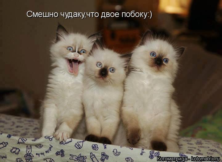 Котоматрица: Смешно чудаку,что двое побоку:)