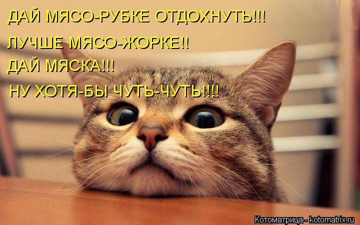 Котоматрица: ДАЙ МЯСО-РУБКЕ ОТДОХНУТЬ!!! ЛУЧШЕ МЯСО-ЖОРКЕ!! ДАЙ МЯСКА!!! НУ ХОТЯ-БЫ ЧУТЬ-ЧУТЬ!!!!