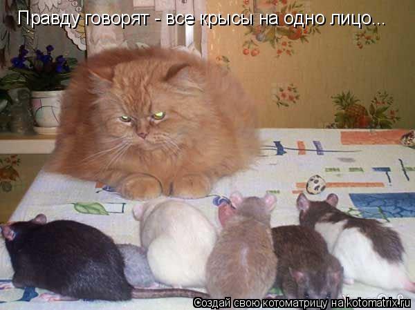 Котоматрица: Правду говорят - все крысы на одно лицо...
