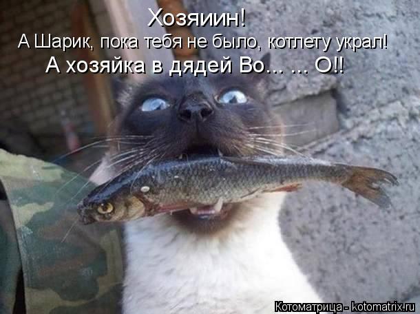 Котоматрица: А Шарик, пока тебя не было, котлету украл! А хозяйка в дядей Во... ... О!! Хозяиин!