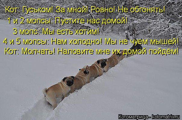 Котоматрица: 3 мопс: Мы есть хотим! Кот: Молчать! Наловите мне их домой пойдём! Кот: Гуськом! За мной! Ровно! Не обгонять!  1 и 2 мопсы: Пустите нас домой! 4 и 5 мо