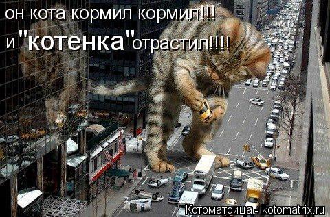 "Котоматрица: он кота кормил кормил!!! и  ""котенка"" отрастил!!!!"