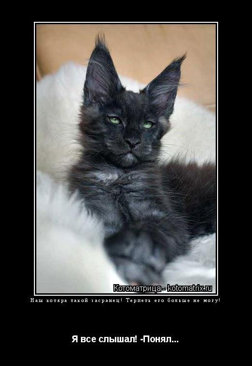 Котоматрица: Наш котяра такой засранец! Терпеть его больше не могу! Я все слышал! -Понял...
