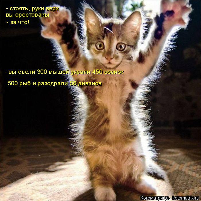 Котоматрица: - стоять, руки верх вы орестованы - за что! - вы съели 300 мышей украли 450 сосиок 500 рыб и разодрали 56 диванов