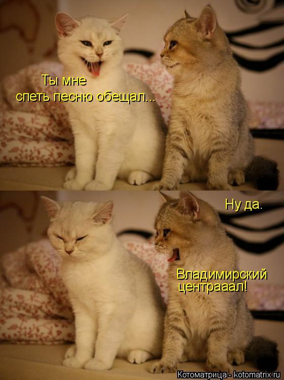 Котоматрица: Ты мне спеть песню обещал... Ну да. Владимирский центрааал!
