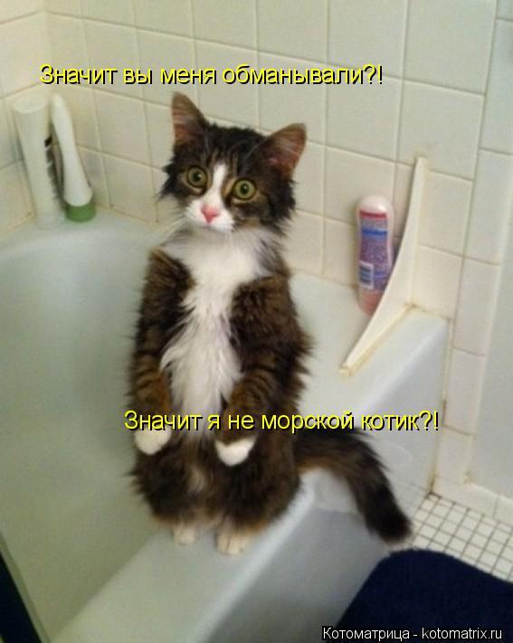 Котоматрица: Значит вы меня обманывали?!  Значит я не морской котик?!